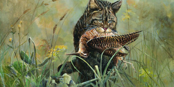 Wilde kat