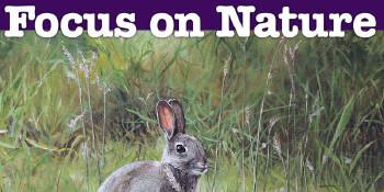 Focus on Nature 2017