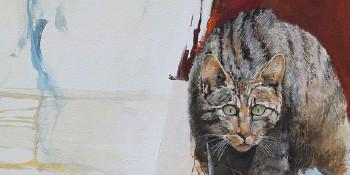 Wilde kat M